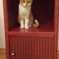 Katze-im-Nachtkästchen