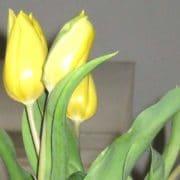Frühjahrsputz Tipps von Nasha Ambrosch
