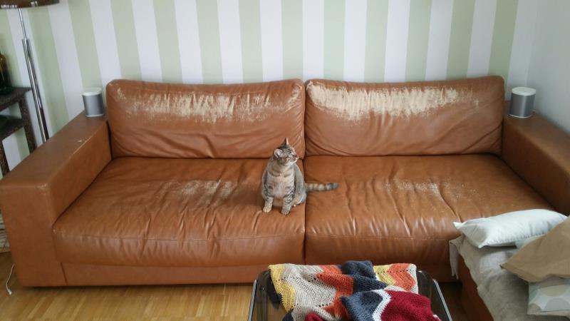 Welcher Sofabezug Für Katzen Housse Von Nasha Ambrosch