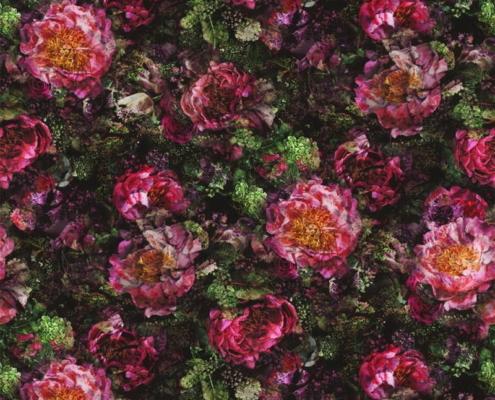 Bezugsstoff-Blumen-Romaunt Rose Fuchsia Designers-Guild