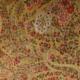 Bezugsstoffe gemustert Timandra 6572-2 Oro Etro-Stoffe